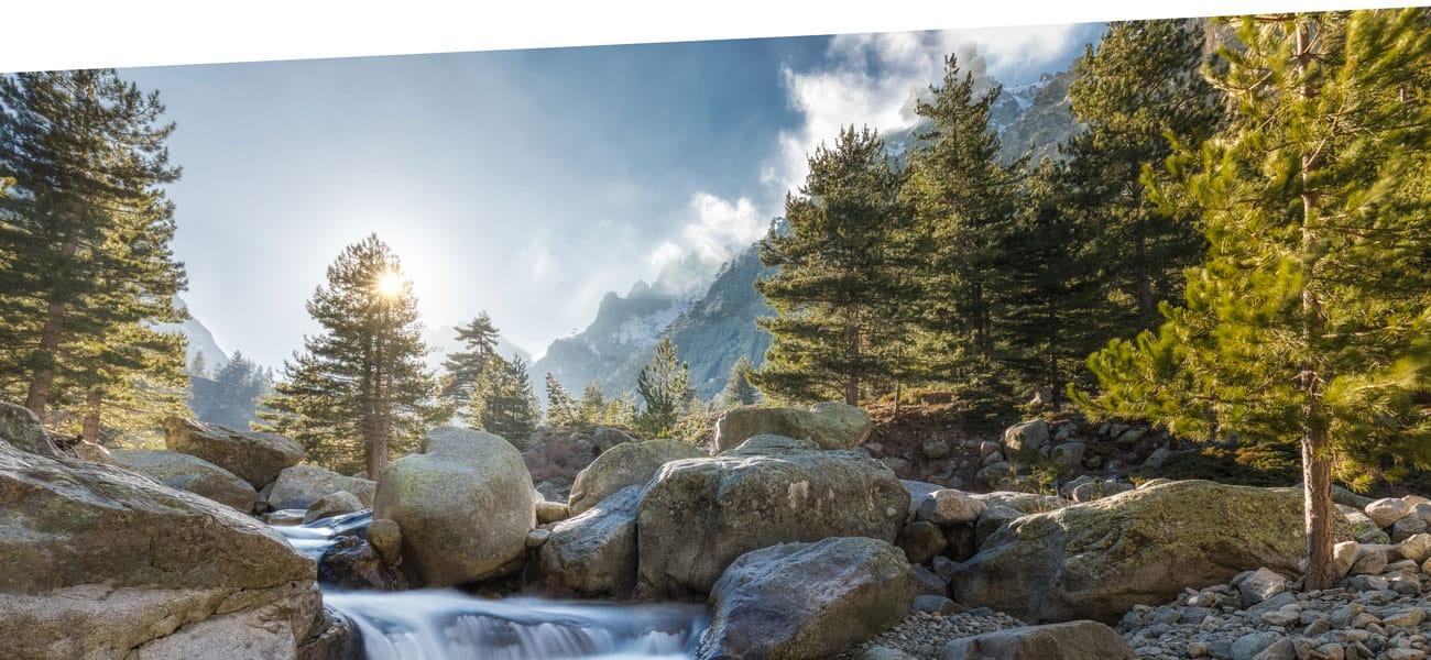 d8a366c20b8bf0 Die ZIRBE – die Königin der Alpen – hat ein beruhigendes
